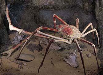 图片----------节肢动物中的霸王