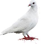 John Woo's signature white dove