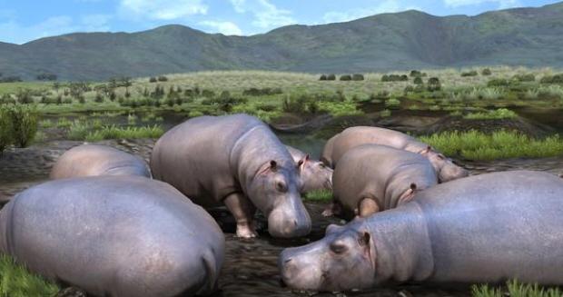 http://www.videogamesblogger.com/wp-content/uploads/2009/05/afrika-hippos-screenshot-releases-in-america-2009.jpg